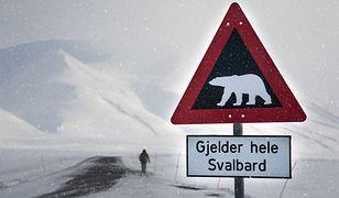 Svalbard to archipelag na biegunie północnym, w którym żyje ok. 2 tys. niedźwiedzi polarnych