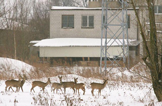 Poszli do lasu na spacer. Znaleźli się w samym środku polowania