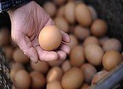 MRiRW: w Polsce i UE staniały jajka