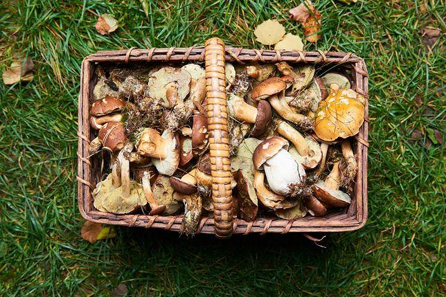 Zebrali prawie 20 kg grzybów. I zapłacili potężną karę