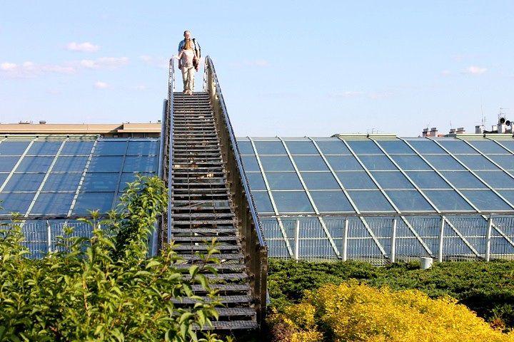 Fotostory: Wiosna na dachu BUW