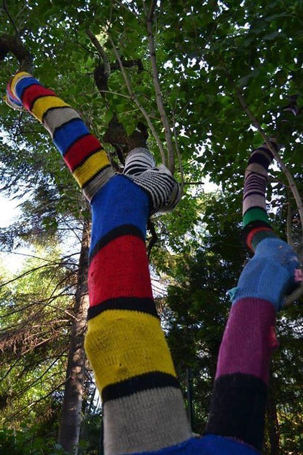 Drzewa w swetrach - co robią na Saskiej?