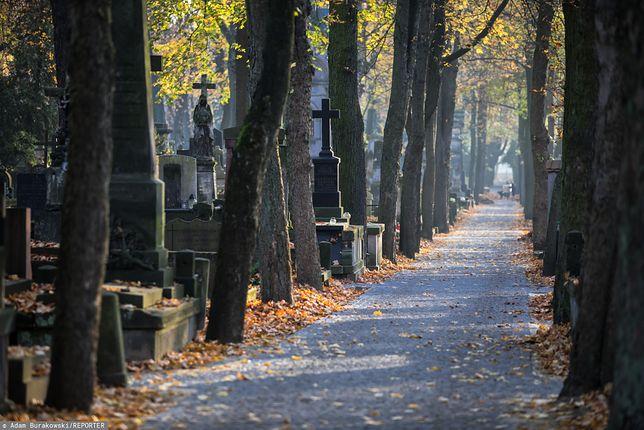 Pogoda na 1 listopada. Rano cmentarne alejki powitają nas słoneczną, ale mroźną aurą