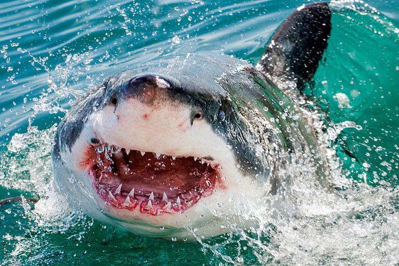 Makabryczny atak rekina. Kobieta miała ogromne szczęście