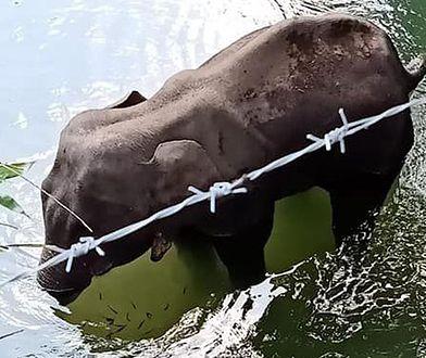 Świadkami ostatnich chwil życia słonicy byli pracownicy parku narodowego