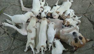 Popularność psów, kotów i królików na Półwyspie Iberyjskim i tak jest niedoszacowana, uważają eksperci