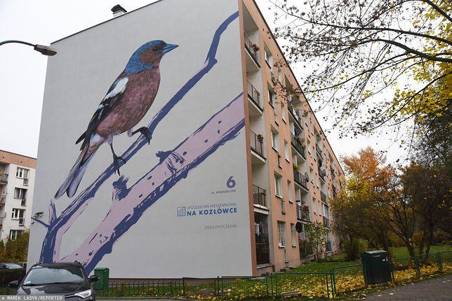 Na zdjęciu Zięba zwyczajna namalowana na jednym z krakowskich bloków