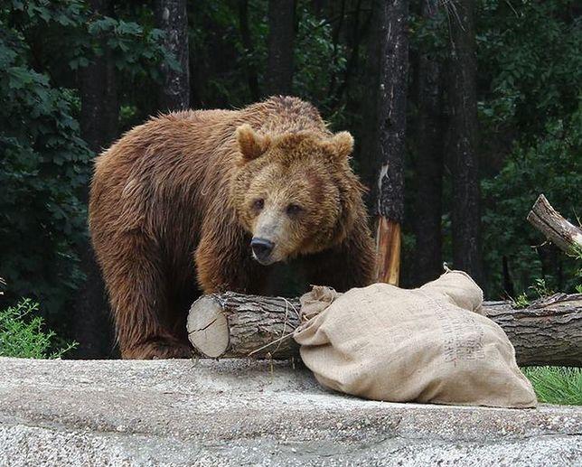 Warszawskie ZOO. Zwierzęta dostały nowe zabawki