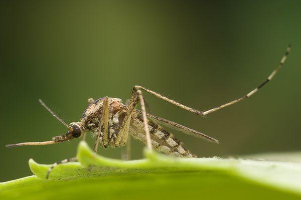Entomolog dla WP.PL: walka z komarami jest niebezpieczna