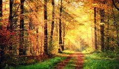Gdzie w Polsce spędzać urlop jesienią?