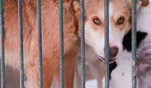 Organizacje na rzecz zwierząt biją na alarm. Przez poselski projekt ograniczający interwencje