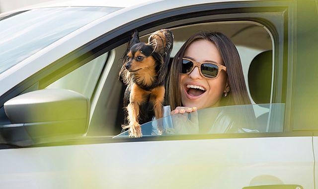 Podróż z psem samochodem. O tym warto wiedzieć