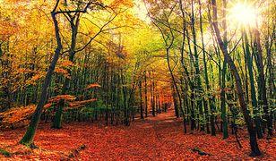 Równonoc jesienna