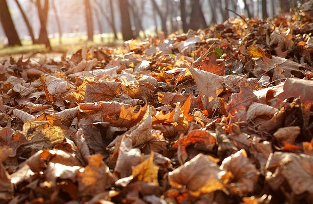 Prognoza pogody na 7 listopada