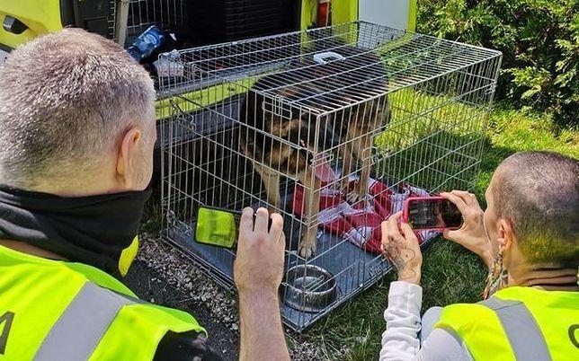 Schronisko w Radysach zostało przeszukane. Mogą w nim być nawet 3 tys. zwierząt