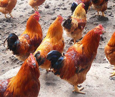 Kastrowane mięso w Biedronce. Sieć z nową ofertą