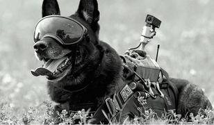 Warszawa. Nie żyje Rico, pies patrolowo-tropiący