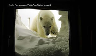 Arktyczne mrozy i niedźwiedzie polarne. Ci Polacy są tym zachwyceni