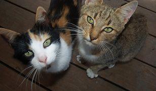 Boguszów - Gorce. Niewinny kot ofiarą sąsiedzkiej wojny. Policja szuka zwyrodnialca
