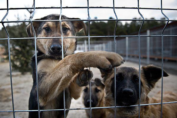 Psy w Polsce często są bite i porzucane, tym bardziej szokuje absurd biurokratycznych przepisów