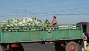 Zdrowa e-żywność prosto od rolnika