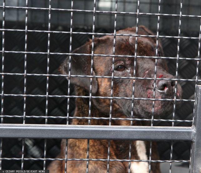 Dolny Śląsk. 25-latek ukradł alkohol, pies przed sklepem ugryzł go w nos / Zdjęcie ilustracyjne