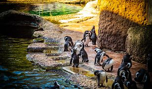 Baby boom we wrocławskim zoo. Na świat przychodzi coraz więcej zwierząt
