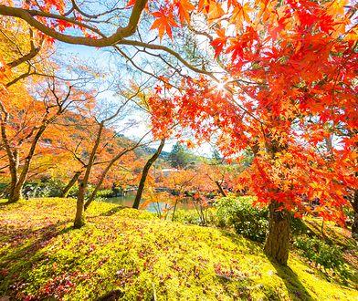 Pierwszy dzień jesieni i równonoc jesienna – 23 września 2019. Dziś rozpoczyna się kalendarzowa jesień. Kiedy kolejna zmiana pory roku?