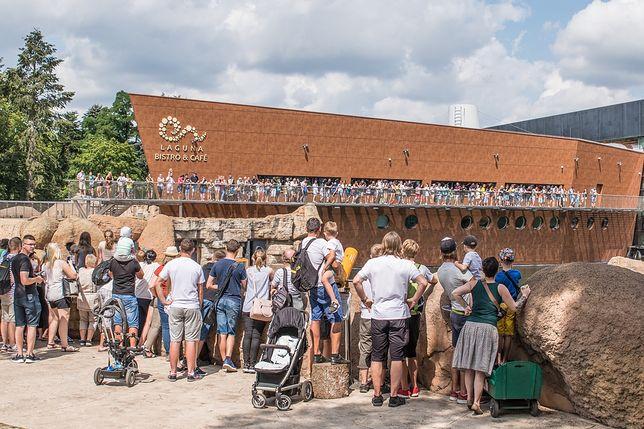 Turyści tłumnie odwiedzali zoo w tym roku