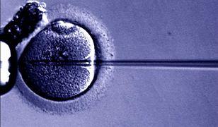 """WSA: MZ ma odpowiedzieć """"Naszemu Bocianowi"""" w sprawie skuteczności in vitro"""
