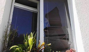 Wybito szyby w mieszkaniu Rafalali. Zginął kot artystki