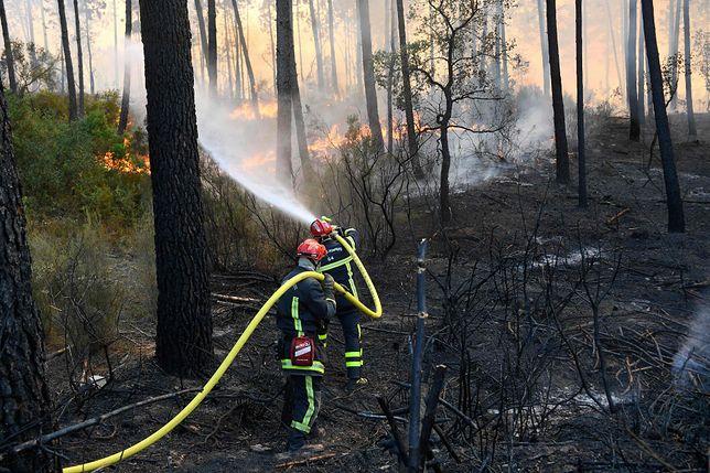 Pożary lasów we Francji. Dwie osoby zginęły