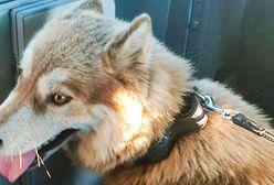 Policjanci uratowali psa przywiązanego do drzewa. Teraz szukają sprawcy