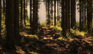 Zmiany od 20 kwietnia. Lasy i parki ponownie otwarte - czy wszędzie trzeba nosić maseczkę?