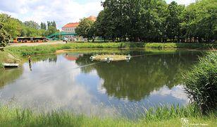 Warszawa. Powstała kolejna wyspa dla chronionych zwierząt