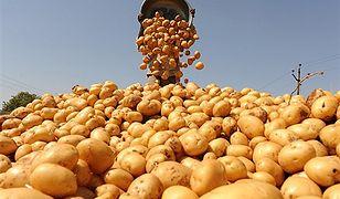 Naukowcy: gotujcie ziemniaki zanim zrobicie z nich baterie