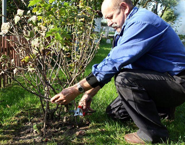 Działkowcy z Gdańska nie chcą oddać swoich ziem.