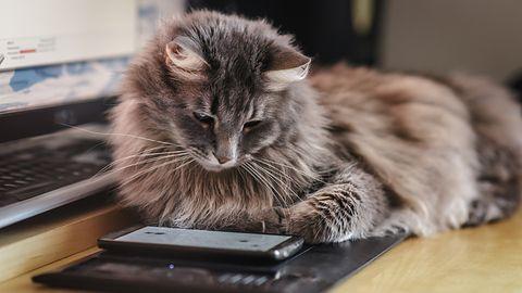 She Wants Me Dead, Homestyler, Gaaiho PDF Reader i Gpredict – najciekawsze programy tygodnia