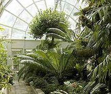 Jedna e szklarni warszawskiego ogrodu botanicznego.