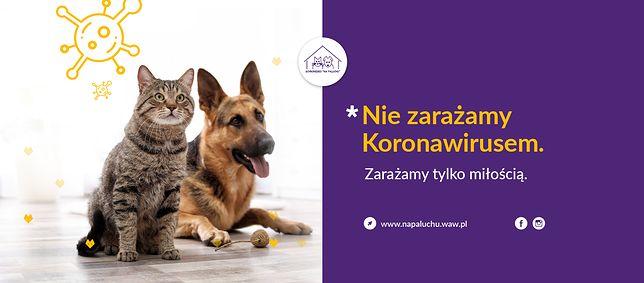 Koronawirus. Warszawa. W czasie epidemii adopcje zwierząt odbywają się w zmienionym trybie.