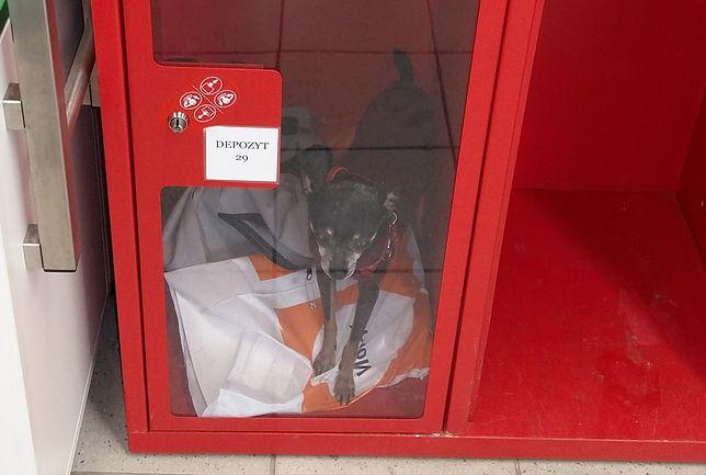 Piesek w depozycie. Klientka Auchan zamknęła go w szafce