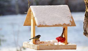 Drewniany karmnik dla ptaków krok po kroku. Zrobisz go w jeden wieczór