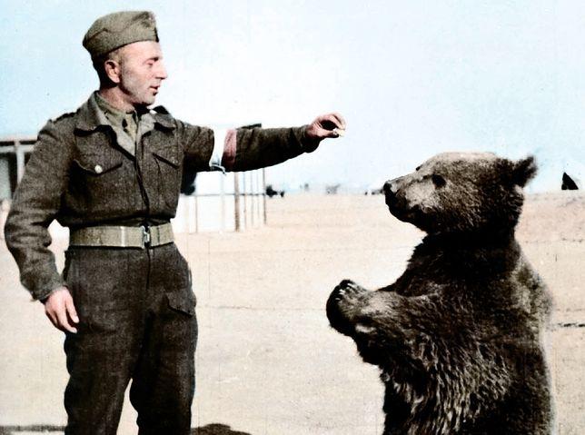 Wojtek z polskim żołnierzem w Iranie, 1942 r.