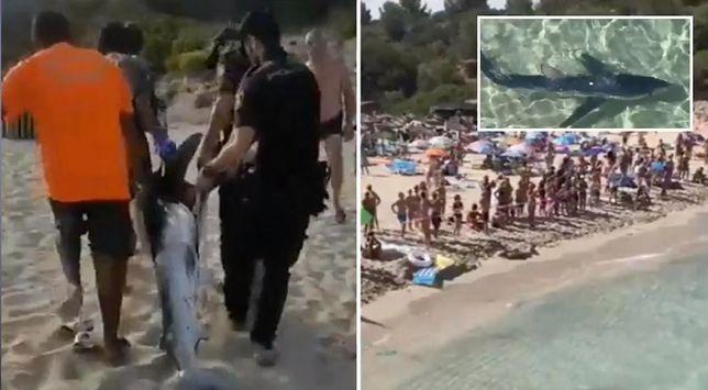 Rekin zakłócił spokój turystom wypoczywającym na Majorce