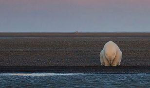 Skutki zmian klimatycznych na Ziemi