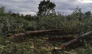 Trwa wycinka prawie 700 drzew przy Kanale Żerańskim. Na ich miejscu powstanie osiedle