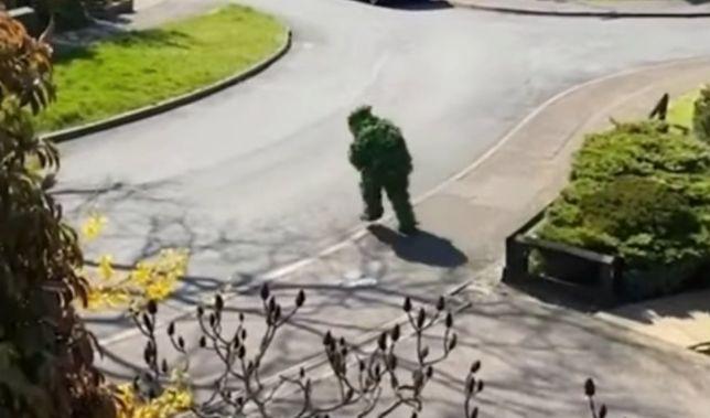 Koronawirus w Anglii: człowiek przebrany za krzak wymknął się z domu podczas kwarantanny