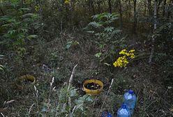 Plantacja konopi indyjskich w środku lasu. 20-latkowie z zarzutami