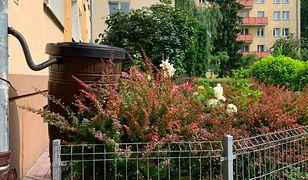Warszawa. Wola szanowania wody. Można dołączyć do zbieraczy deszczu