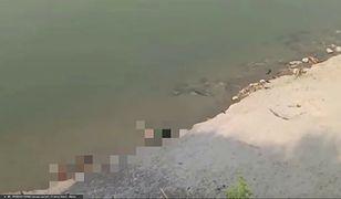 Makabryczne nagrania z Indii. Dziesiątki ciał w Gangesie